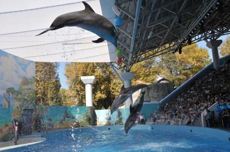 """Ҳавзи оббозии """"Делфин"""" дар маркази шаҳри Сочӣ вокеъ мебошад. Дар ин ҷо дар баробари роҳатафзоӣ, ҳамчунин маълумоти хеле зиёд метавонад дар бораи делфинҳо ва қобилиятнокии гирифт"""
